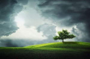 Bright tree on a hill in a thunderstorm on Somatic Bodywork page